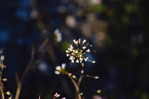 Macro, Plant, Nature, Blossom, Spring, Petals, Flowers