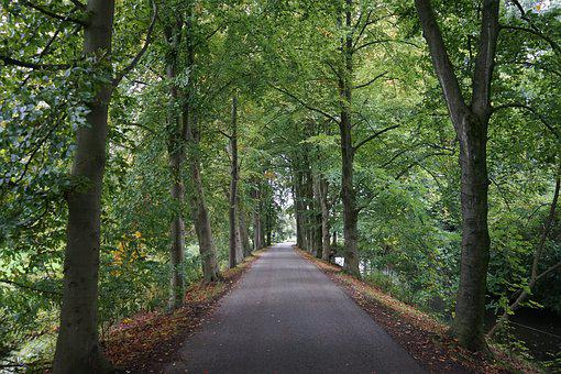 Forest, Avenue, Away, Rain, Autumn, Landscape, Path