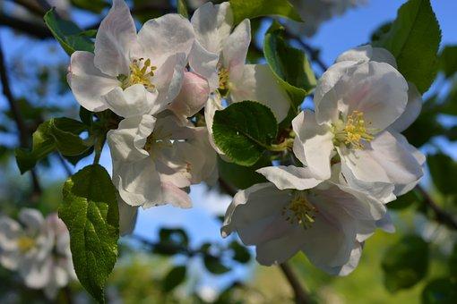 Flowers, Garden, Nature, Flora, Spring, Botanica