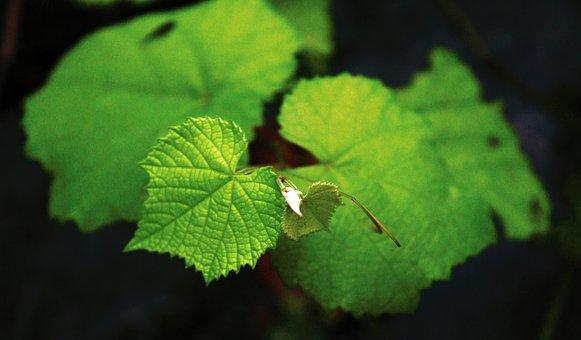 Green, Nature, Leaf, Pattern, Plant, Summer, Grass