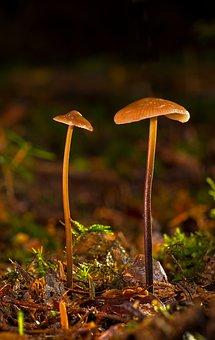 Small Mushroom, Hamid, Mushroom, Forest, Autumn