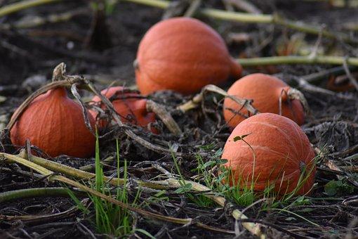 Pumpkin, Pumpkins, Orange, Autumn, Harvest, Food