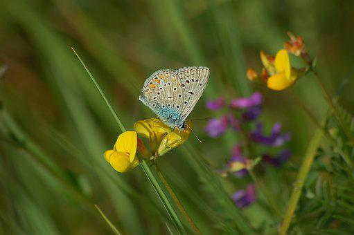 Moth, Flowers, Grass, Herbs, Life, Insects, Plants