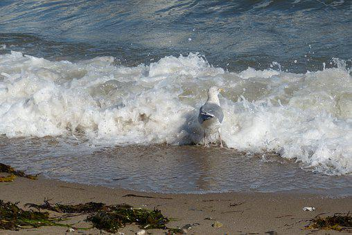 Baltic Sea, Gull, Bird, Sea, Water, Coast, Landscape