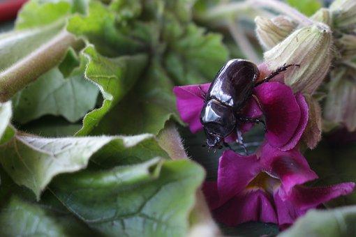 Insect, Plant, Rains, Chicatana, Mayate, Plants