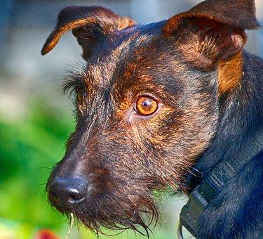 Dog, Old, Portrait, Eye, Light, Animal, Domestic