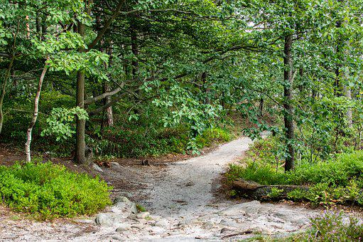 Away, Forest Path, Hiking, Trail, Trees, Path, Nature