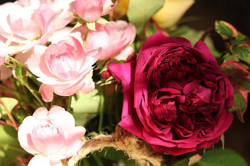 Roses, Bush Roses, Nature, Bloom, Garden, Plant