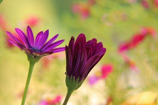 Flower, Beauty, Blossom, Bloom, Romance, Flora, Spring