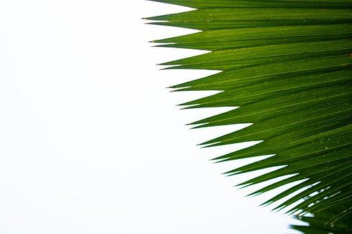 Green, Forrest, Leaf, Leaves, Nature, Spring, Flora