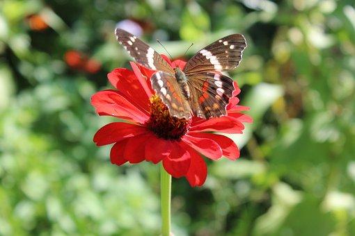 Flower, Winch, Green, Garden, Nature, Summer