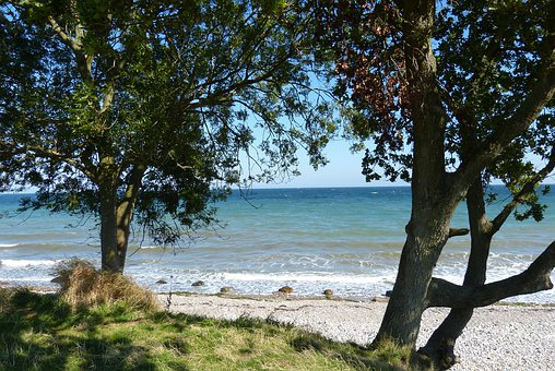 Baltic Sea, Trees, Stone Beach, Summer, Sea, Water