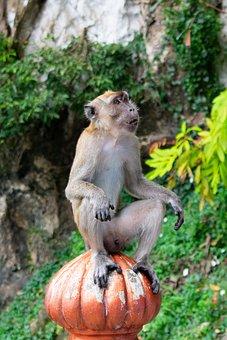 Monkey, Jungle, Animal, Nature, Wildlife, Wild, Cute