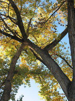 Tree Branches, Leaves, Sky, Spring, Trees, Wood