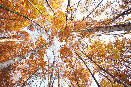 Autumn, Tree, Yellow, Forest, Nature, Colorful