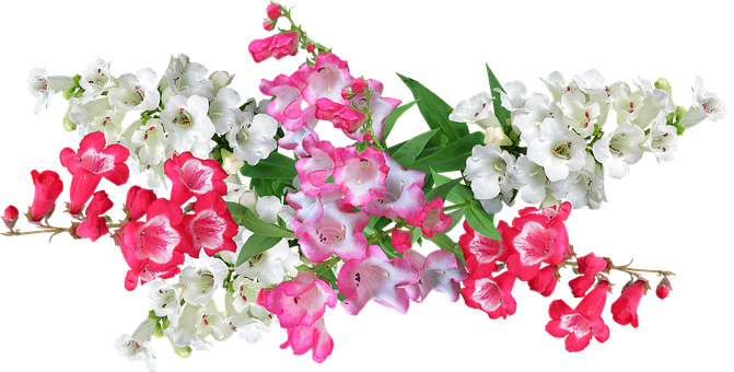 Flowers, Penstemons, Summer, Arrangement, Blooms
