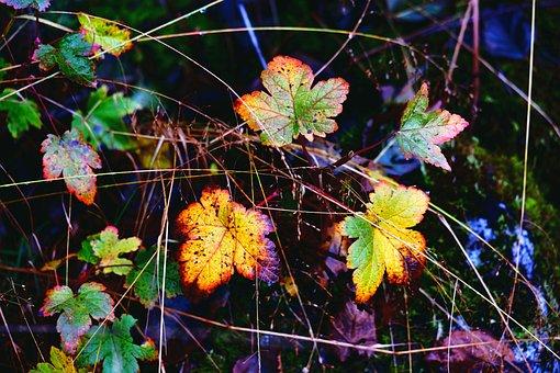 Nature, Autumn, Foliage, Figure, Forest
