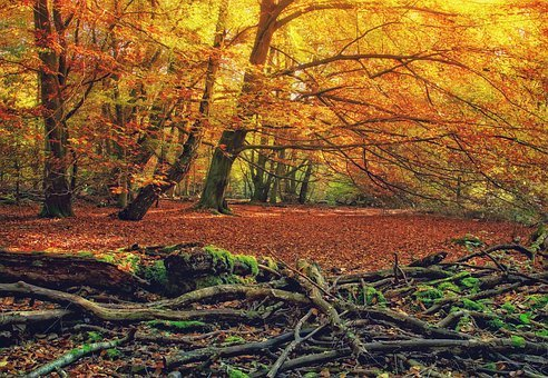 Forest, Autumn, Trees, Dead Wood, Life Cycle, Strains
