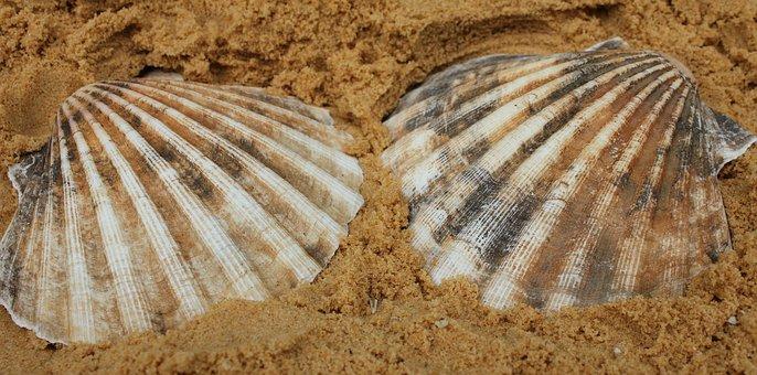 Shell, Scallop, Casing, Seashell, Seaside, Seashore