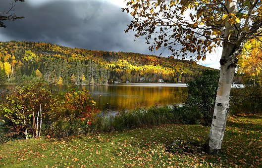 Landscape, Fall, Nature, Trees, Colors, Leaves, Forest