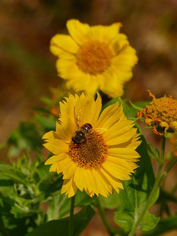 Bee, Flower, Insect, Bloom, Yellow, Flowers, Flora