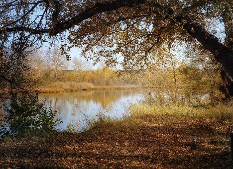 Landscape, Autumn, Trail, Forest, Nature, Tree
