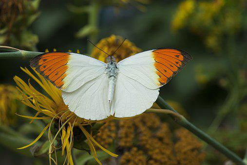 Butterfly, Color, Wing, Nature, Summer, Animal, Garden