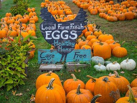 Pumpkins, Farm, Sign, Autumn, Fall, Harvest, Orange