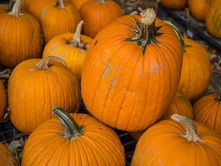 Pumpkins, Patch, Thanksgiving, Autumn, Harvest, Orange