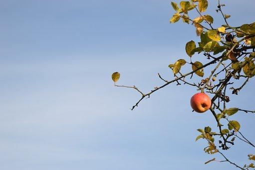 Apple, Fall, Tree, Fruit, Orchard, Harvest, Nature