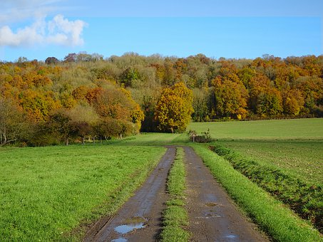 Autumn Landscape, Field, Path, Wood, Fall Colors, Light