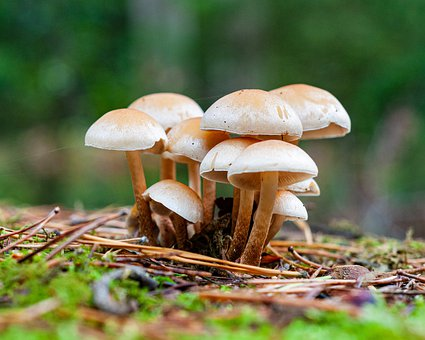 Mushroom, Autumn, Forest, Nature, Moss, Macro