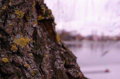 Tree, Moss, Landscape