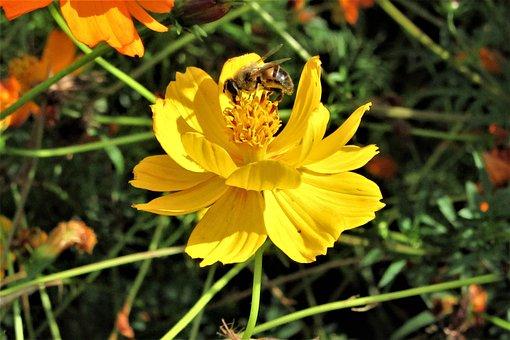 Flower, Bee, Nature, Beautiful, Stamens, Vegetation