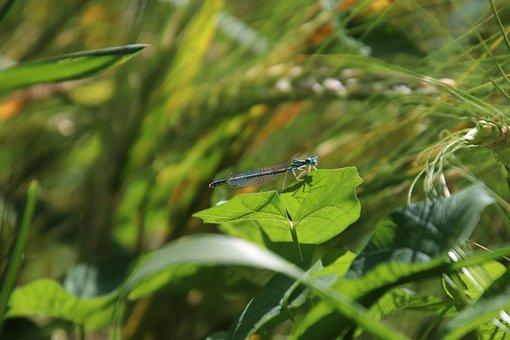 Grasses, Green Wheat, Foliage, Plants, Nature, Field