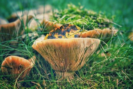 Mushrooms, Autumn, Season, Nature, Collect, Edible