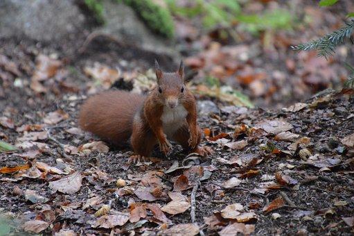 Squirrel, Forest, Nature, Animals, Animal World, Cute