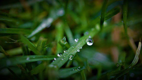 Rain, Weather, Autumn, Dark, Green, Season, Gloomy