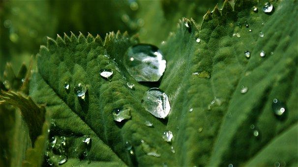 Sheet, Water, Drops, Rain, Dew, Nature, Vegetable, Drip
