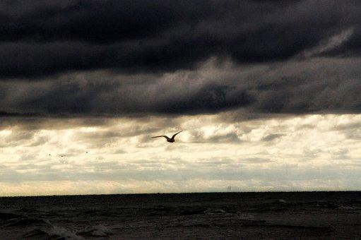 Seagull, Baltic Sea, Wind, Wave, Water, Horizon