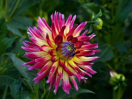 Dahlia, Flower, Beautiful, Bright, Bloom, Flora, Yellow