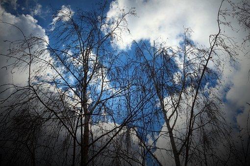 Russia, Saratov, Sky, Birch, Nature, Clouds, Blue, Calm