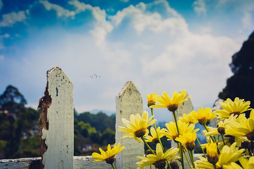 Landscape, Daisies, Daisy, Nature, Spring, Flowers