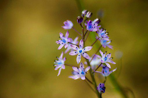 Flower, Purple, Blue, Bloom, Nature, Plant, Blossom