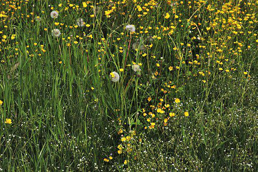 Green, Meadow, Plants, Growth, Flowering, Eco, Summer