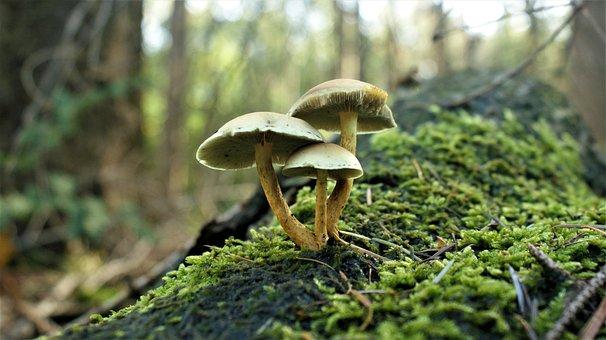 Mushrooms, Autumn, Magic, Forest, Trees, Plants