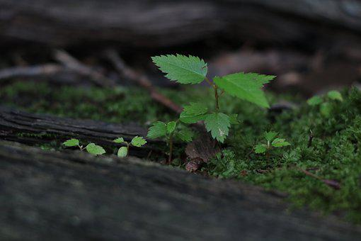 Sprout, Plant, Seedling, Grow, Green, Growth, Spring