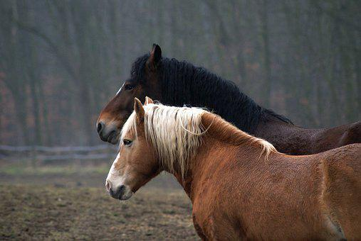 Horses, Pasture, Nature, Mane, Horse Head, Horse