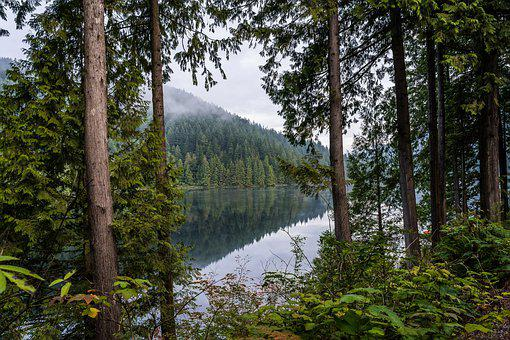 Lake, Forest, Water, Nature, Landscape, Mountains