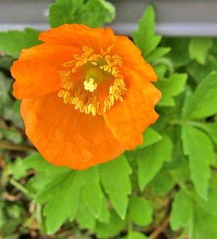 Flower, Orange, Autumn Flower, Leaves, Green, Petals